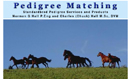 Pedigree Matching